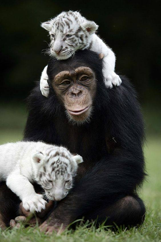 A mom is a mom, no matter what the species. :)