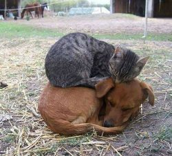 Animals do amazing things. <3