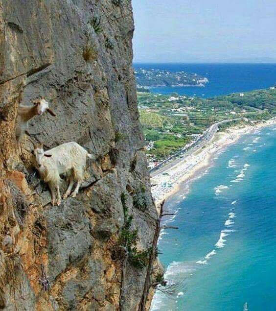 Bravest Goats in the world  :D