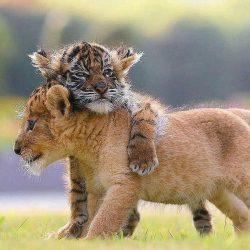 Everyone needs a good hug