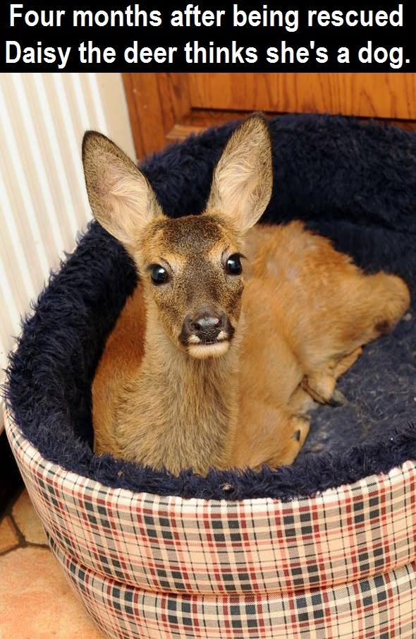 Had to share! (Y)  Isn't Daisy the deer adorable? <3