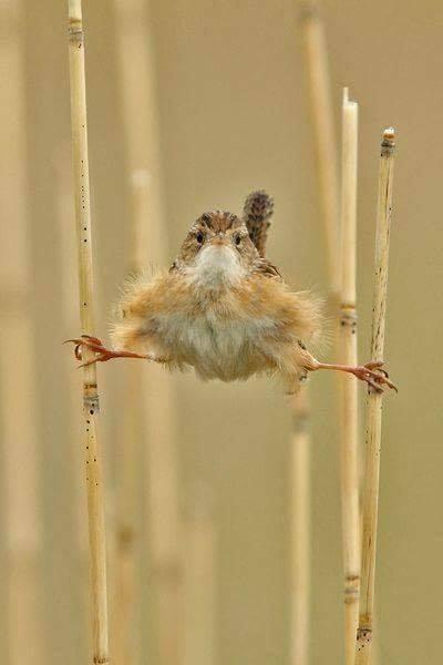 Jean Claude Van Bird :D