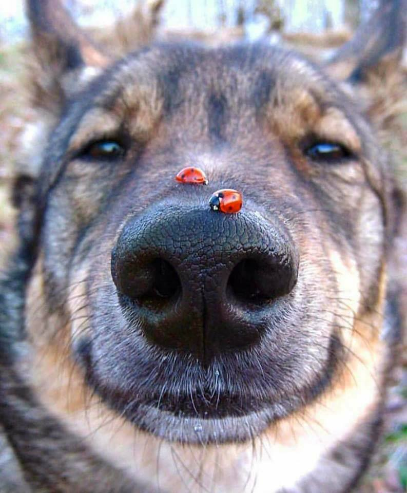 Ladybugs landed on his snout! :D