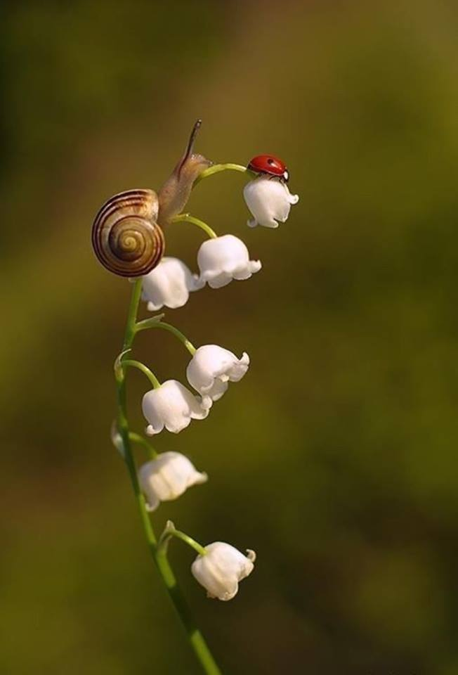 Lilly of the Valley flower, the snail & the lady bug. <3 <3