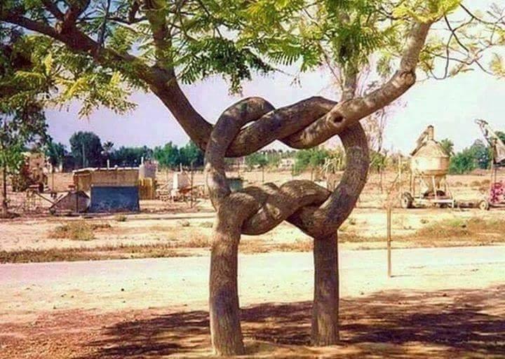 Natural knot… :o