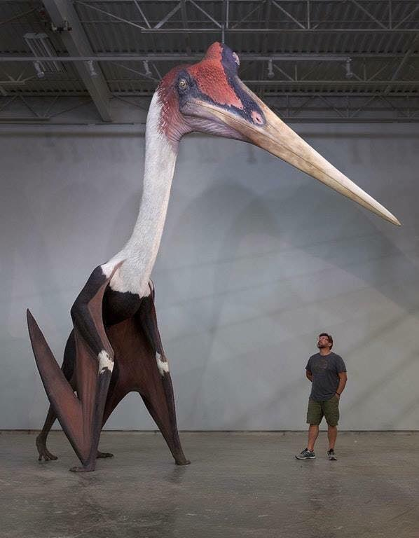 The North American Quetzalcoatlus Northropi is the largest flying animal that has ever existed. :o