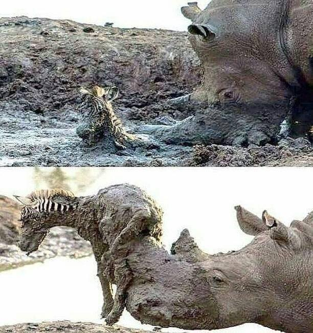 The Saviour! Why can't humans be like this.