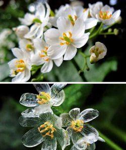 The Skeleton Flower's petals become transparent when it rains. :o