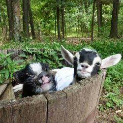 These two best-friends claimed the planter as their new playhouse.. <3