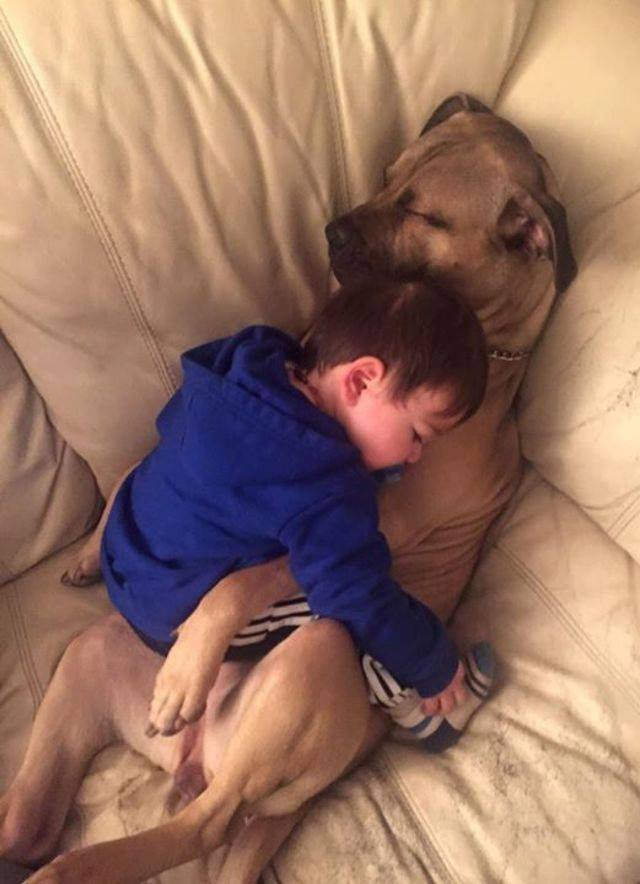 """""""They fell asleep together like this.""""  Who else thinks this is adorable?"""