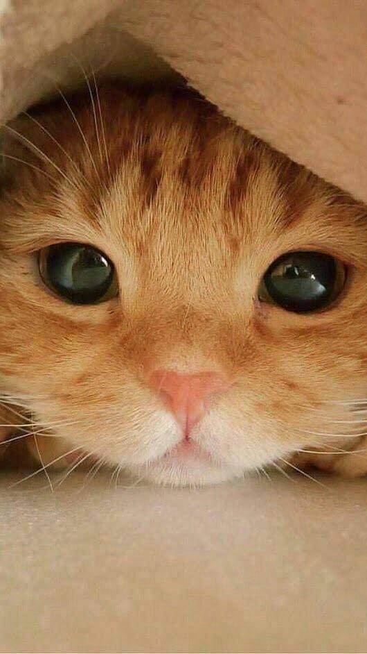 Those eyes..
