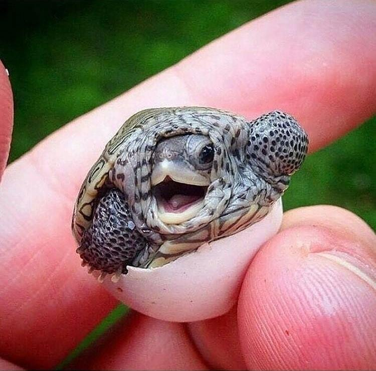 Welcome little turtle