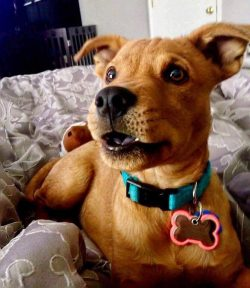 Young Scooby-Doo!! :D