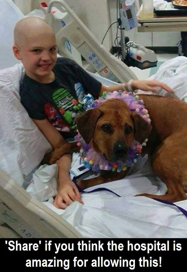 """""""10-Year-Old Staton is undergoing cancer treatment. They let his dog in the hospital for c ..."""