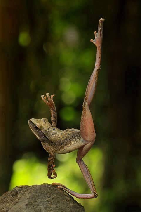 A Frog Dancing Ballet too cute! :D