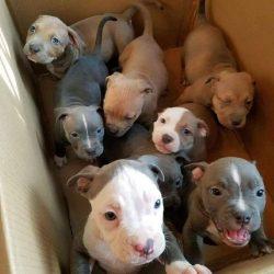 A box full of cuteness!!
