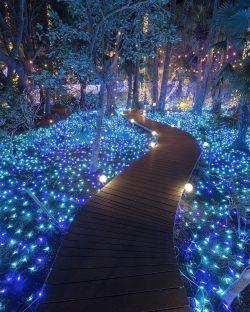A fairytale forest  Enoshima Tropical Plants Garden, Kanagawa, Japan