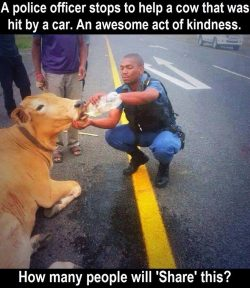 A police officer stops to help a cow that was hit by a car. An awesome act of kindness.   Had to ...