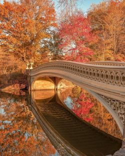 Autumn explosion at Central Park New York.