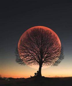 Beautiful photo!!