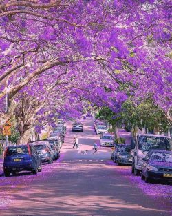 Blooming explosion!  Sydney, Australia