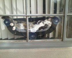 Cat hammocks!! :D