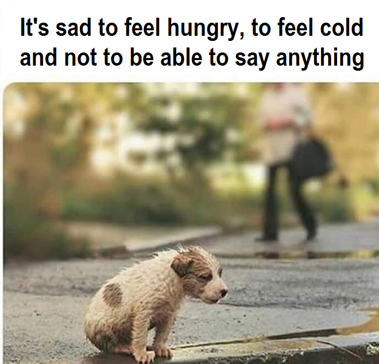 Do not turn your back on a street animal! Maybe it's your last chance at life. <3