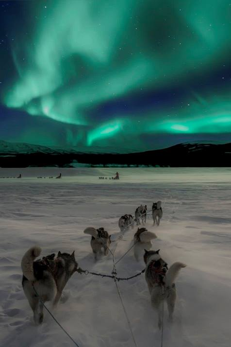 Dog-sledding under the Northern lights in Norway.
