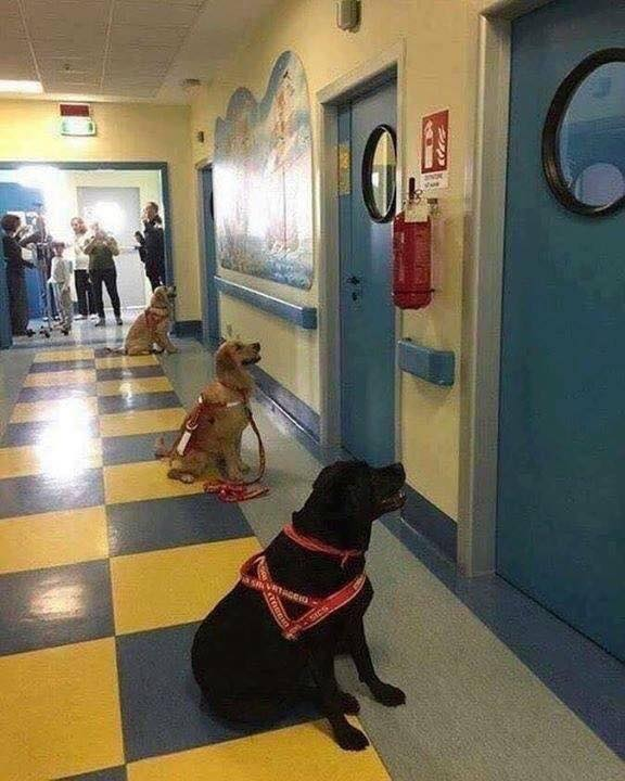Dogs waiting to enter the hospital rooms of sick children for animal therapy. :o