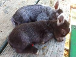 Just a couple of baby donkeys