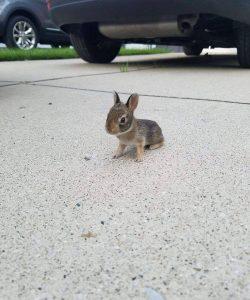 Look at this teeny tiny bunny.. <3