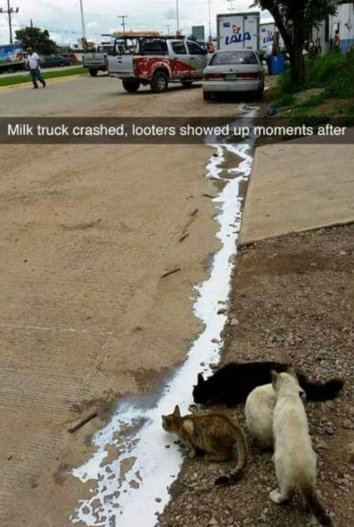 Milk truck crashed, looters showed up moments after.