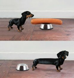 Once upon a time there was a sausage and a dog..
