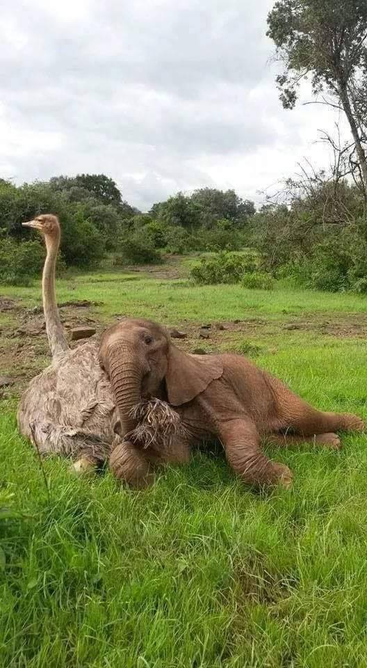 One word for this unique friendship? :)