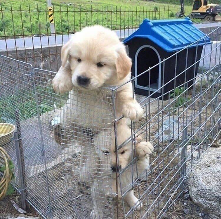 Prison break Prison break