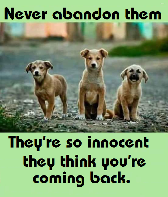 So true… Please pass it on.. <3 Never abandon them.  They're so innocent they thi ...