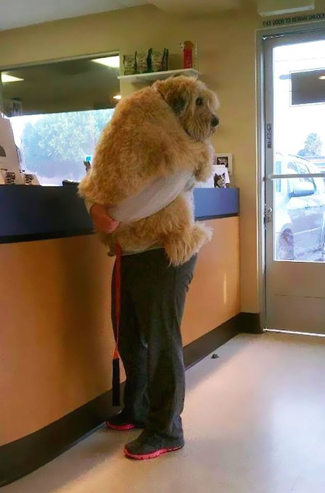 Somebody needed some comforting during a checkup at the vet.
