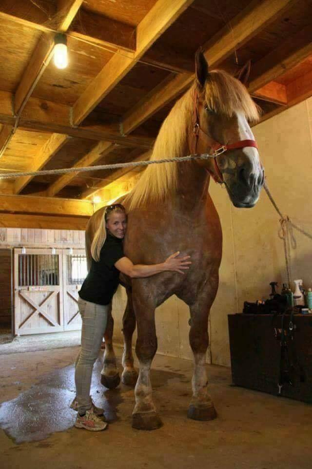 """Standing over 7 feet tall and weighing a massive 2600 pounds, """"Big Jake"""" is currently the world' ..."""