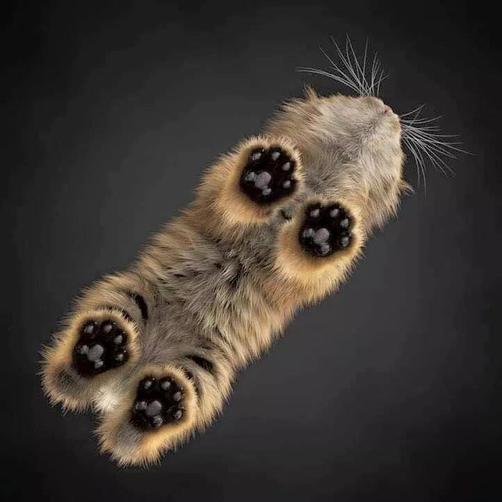 Taken from under a glass table top.  Look at those paws! <3
