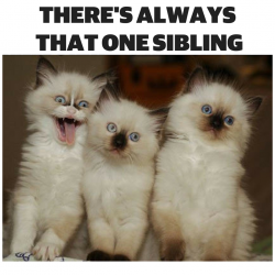 That one sibling :D