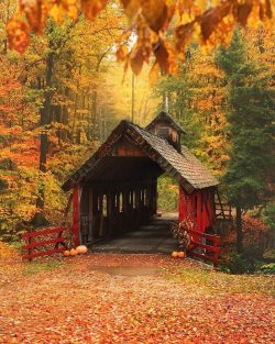 The pouring rain made the fall colors really shine at the Loon Song Covered Bridge the other day!