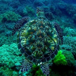 There seems to be a show of fireworks in the hull of this turtle