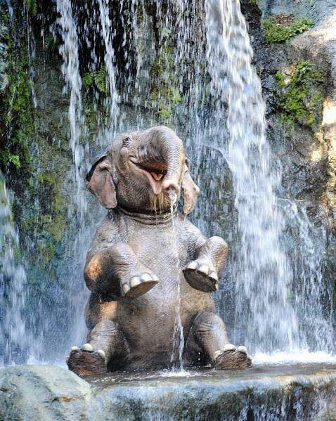 A picture is worth… an Elephant having fun!!
