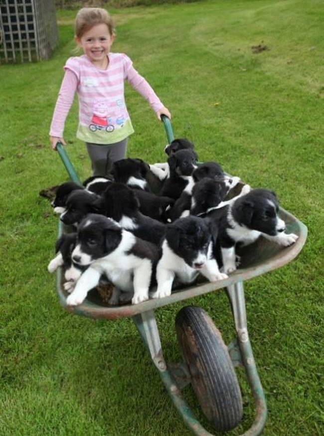 A wheelbarrow full of sweetness! <3