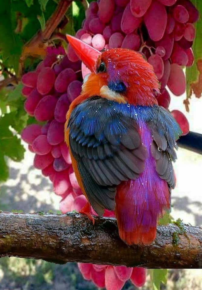 Absolutely gorgeous colorful bird