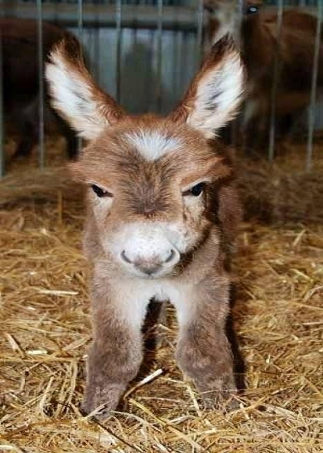 Adorable baby donkey