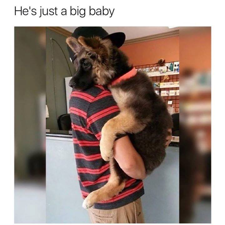 Anyone have a dog like this?