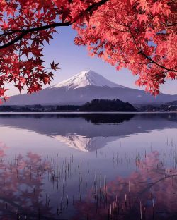 Autumnal portraitMount Fuji, Japan.