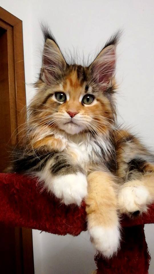 Cat of the day <3