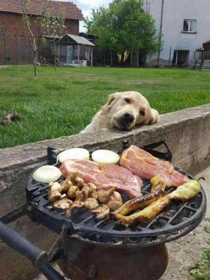Day dreaming in front of the BBQ..